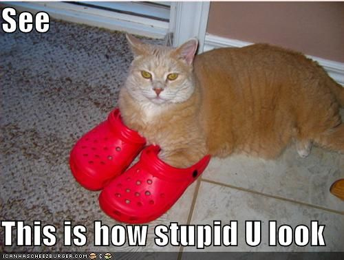 funny-pictures-red-shoes-cat-stupid.jpg