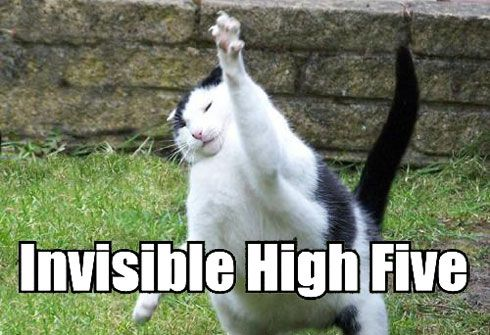lolcat-high-5.jpg